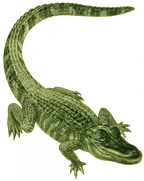 gators\'s avatar