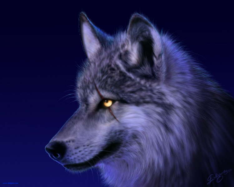 WolfHunter\'s avatar