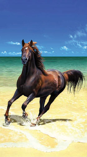 beautifulhorses\'s avatar