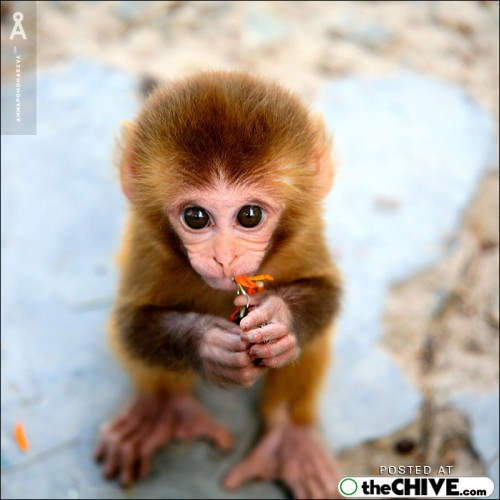 monkeytastic\'s avatar